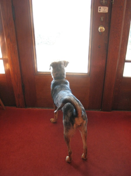 Roxy awaits a guest
