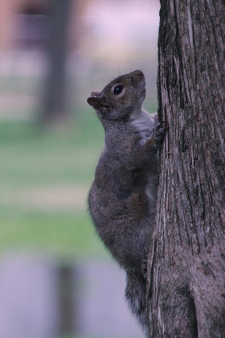 squirrel-2