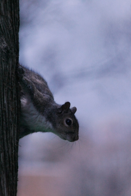 squirrel-3