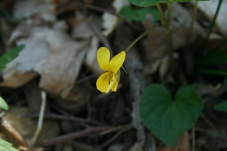 yellow-violet