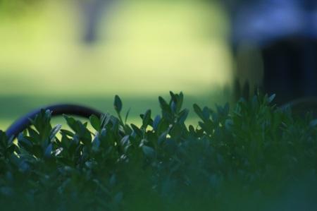 green diffusion