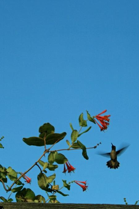 hummer flight