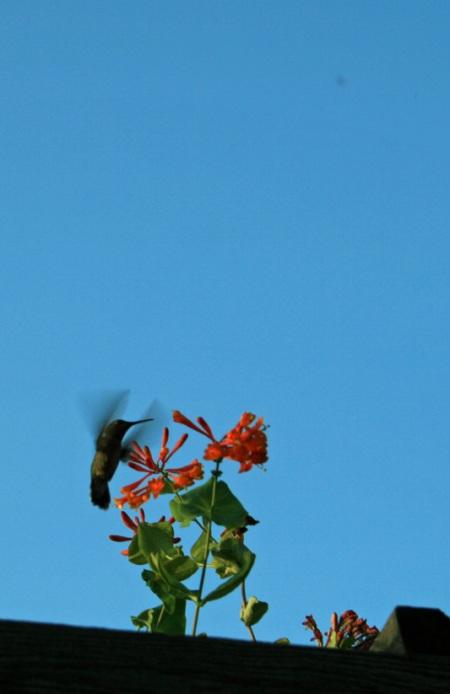 hummer flightb