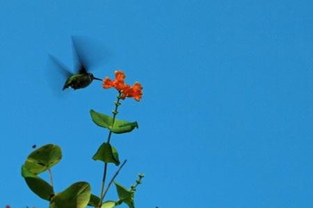hummer flightc