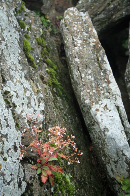 flower in the rock