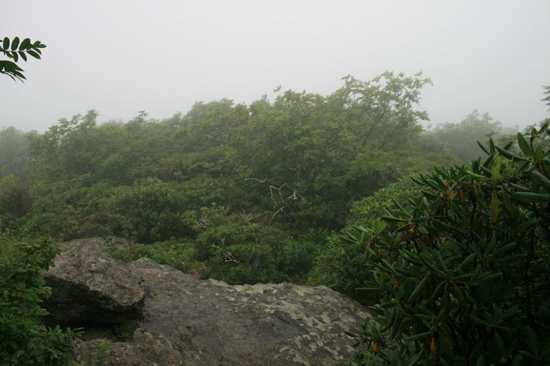 North Carolina Craggy Pinnacle Trail Strange Bird